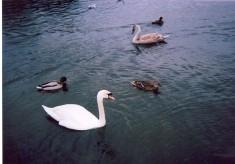 Photos of Verulamium Park