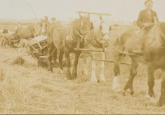 Farming in World War 1