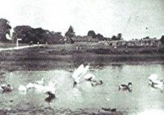 Emma Webb's Poultry