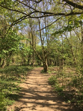 Path through woods in Ware Park, 15th April 2020 | Geoff Crodingley