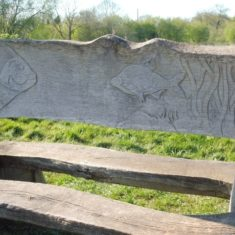 Part of the seat back of the wildlife bench, depicting barbel | Colin Wilson