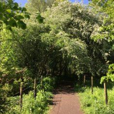 Hawthorn blossom tunnel | Geoff Cordingley