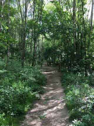 Path through Ware Park Arboretum, 11th May 2020 | Geoff Cordingley