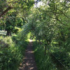 Lower Path at Ware Park | Geoff Cordingley