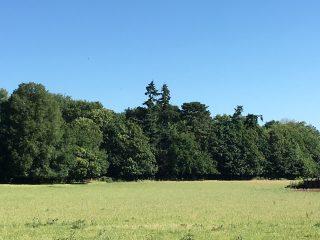 Greenery in Ware Park | Geoff Cordingley
