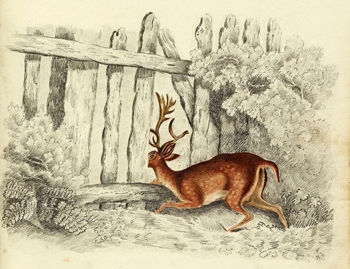 Watercolour of a deer peeping through a fence | HALS (ref Acc 3133)