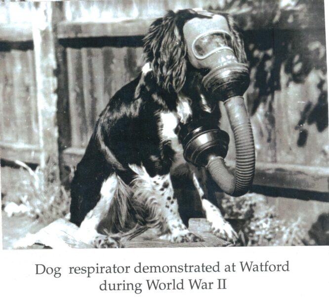 Dog Respirator in Watford | Hertfordshire Archives and Local Studies