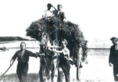 Italian POWs from Royston Camp at Harvest