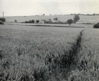 Quinbury Farm in its isolated position across the fields | 'Rececca West: A Life' by Victoria Glendinning, 1987