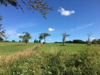 Isolated trees in the fields of Ware Park | Geoff Cordingley