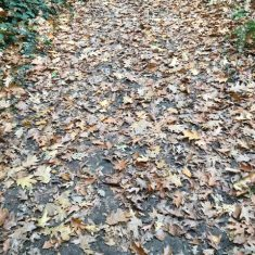Path strewn with dead leaves in Autumn | Geoff Cordingley