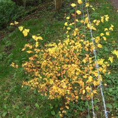 small bush almost totally yellow | Geoff Cordingley