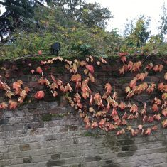 Autumnal red flowers on wall | Geoff Cordingley