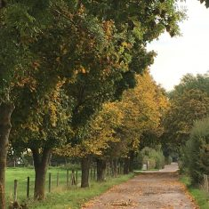 Unmade-up road with puddles and trees on either side beginning to turn yellow in October | Geoff Cordingley