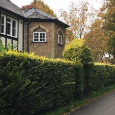 A green privet hedge with yellow top | Geoff Cordingley