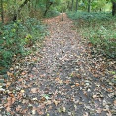 Path strewn with dead leaves between green bushes | Geoff Cordingley