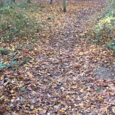 Path through trees with dead leaves of various colours covering it | Geoff Cordingley