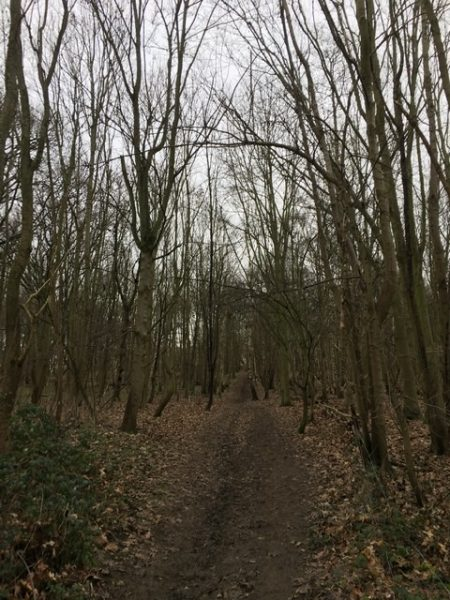 trees with bare branches silhouetted either side of the path on the hill through Ware Park wood