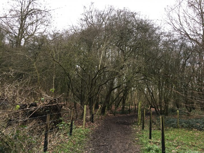 Trees with bare branches either side of the unmade up road in Ware Park with fence posts and grass showing