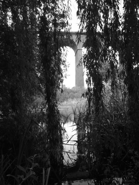 Mimram River running through willow trees with the Digswell viaduct in the background | Toby Shelley