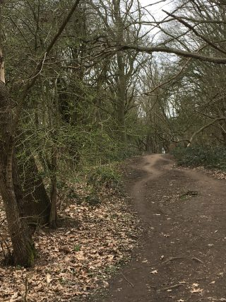path through a number of thin trees on either side. The trees are coming into leaf andone bow is leaning over the path. | Geoff Cordingley