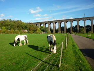 A contemporary view of Digswell Viaduct | Jennifer Ayto