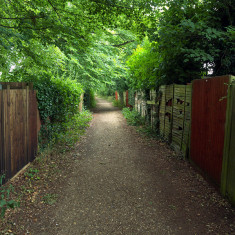 Since the line's closure gardens have extended to the top of the high embankment in north Harpenden. | July 2010, © St Albans Museums