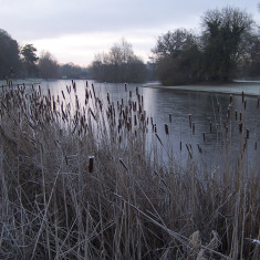 Bullrushes and the frozen lake | by Richard Brockbank