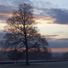 Large tree against the cloud and rising sun | by Richard Brockbank