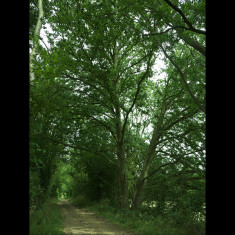 The descent from Knotts Wood towards Redbourn | July 2010, © St Albans Museums