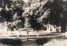 The Avenue, 1920s