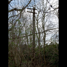 Railway telegraph post between Hill End Halt and Smallford, 2009; possibly the last standing post on a Hertfordshire branch line | © St Albans Museums