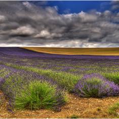 Hitchin Lavender | Bill Martin