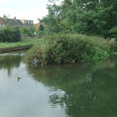 The island above Church Lane, looking upstream | Nicholas Blatchley