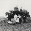 Agricultural Workers, Tring