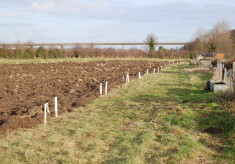 New allotments at Cromwell Road, Hertford 2009