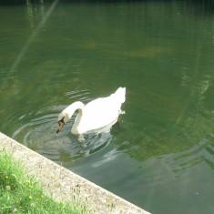Amwell Pool   Nicholas Blatchley