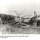 Reaping at Anstey Hall Farm