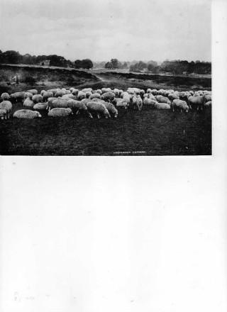The Baa - Lamb trees