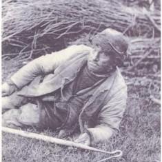 Billy Oliver, Shepherd.  Tring c1900