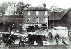 Bohemia Farm