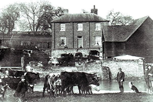 Bohemia Farm | Geoff Webb
