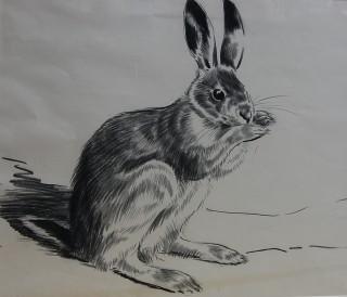 Brown Hare | Welwyn Hatfield Museum Service