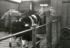 The cattle market at Hertford