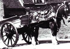 Flamsteadbury Farm carthorse