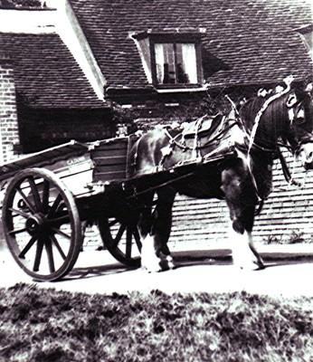 Flamsteadbury Farm carthorse | Geoff Webb