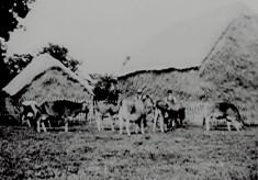 Bylands Farm