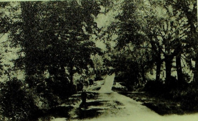 Cuffley Hill, 1905 | Iain Bickerton