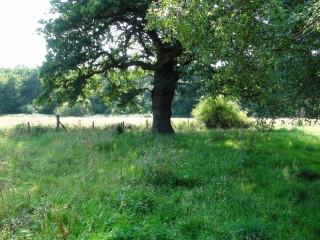 The area around More Hall where Thomas More would have once walked | Adam Jones-Lloyd