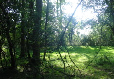 Ickleford Common